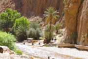 Lokals Marokko